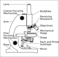 Labelling Art Microscope With Labels Clip Art At Clker Com Vector Clip Art