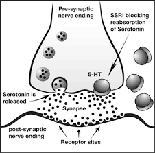 social anxiety, serotonin