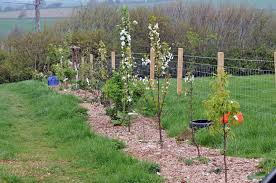 Replanting Hedgerows Using Permaculture Design  Permaculture MagazineFruit Tree Hedgerow