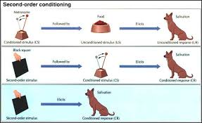 summarize the components of classical conditioning  summarize the components of classical conditioning portfolio project