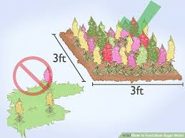 How To Feed Bees Sugar Water 13 Steps With Pictures Wikihow
