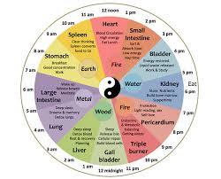 Body Regeneration Chart Meet The Chinese Body Clock Is This Why Youre Waking Up At