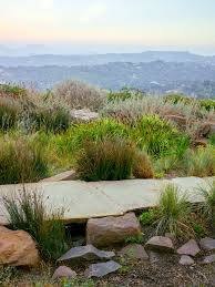 best garden plants. Planting Your Basin Best Garden Plants
