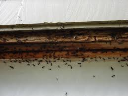 Finding Where The Carpenter Ants Live