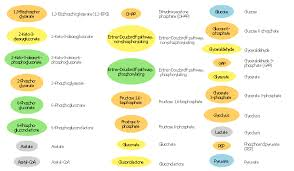 Glycolysis Flow Chart Glycolysis Overview Biology Glucose Catabolism Pathways