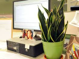 plants for office cubicle. even if you work in a windowless office can grow some sort of houseplant plants for cubicle