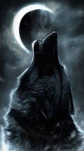 howling wolf wallpaper. Plain Wolf Howling Wolfwallpaper10925045jpg Intended Wolf Wallpaper N