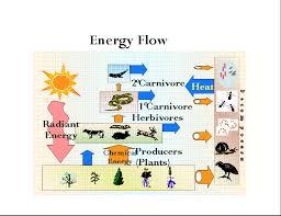 Energy Flow Ecology Explained