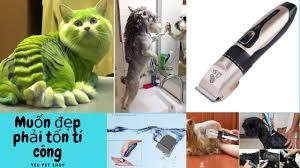 Hướng dẫn sử dụng Tông đơ cắt tỉa lông chó mèo Series Q7 - YouTube