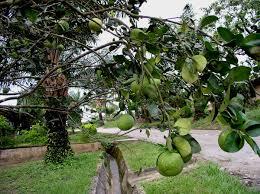 Fruit Trees U2013 Philadelphia Orchard ProjectFruit Trees In Michigan
