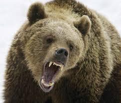 Kuvahaun tulos haulle karhu