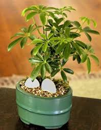 Tropical office plants Low Light Life Amidst Indoor Plants How Wonderful Neginegolestan Life Amidst Indoor Plants How Wonderful Interior Office Plants