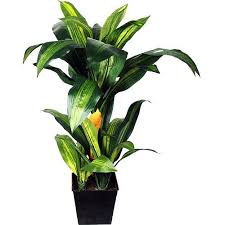 Walmart Tropical Potted Plants - Check out the free plant identification  mobile app at GardenAnswers.