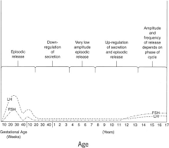 Stages Of Puberty In Males Chart Physiology Of Puberty Glowm