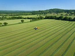 grass field aerial. Aerial View Of Forage Harvester Cutting Grass Silage Crop In Field And Filling Tractor Trailer N
