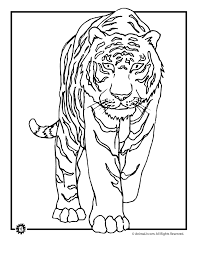 Small Picture Printable 35 Wild Animal Coloring Pages 3658 Tiger Coloring