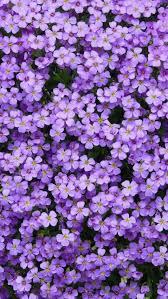 Purple flowers wallpaper, Flower ...