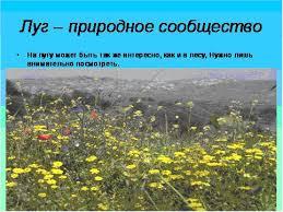 Растения луга Луг реферат