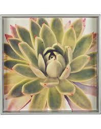 Rock Paper Flower Trays Rockflowerpaper Green Succulent Square Tray Oak Willow