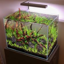 The New Onf Flat Nano Lighting On Our Home 45cm Nano Tank