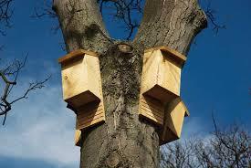bat houses high in a tree istockphoto com jerome whittingham