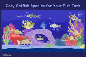 Catfish Chart 7 Cory Catfish Species For Your Aquarium Tank