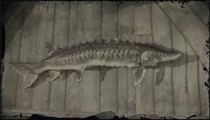 Legendary Lake Sturgeon Red Dead Wiki Fandom
