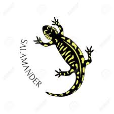 Hand Drawn Salamander In Black And Yellow Color Vector For Tattoo