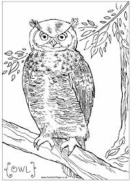 Small Picture Birds of Prey Coloring Pages Bestofcoloring unique Birds Of Prey