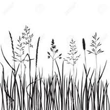tall grass silhouette. Interesting Tall Illustration Of Black Grass Silhouettes Hand Drawn Wild Cereals Meadow  Wild Vector Art Clipart And Stock Vectors On Tall Grass Silhouette O