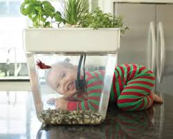 Self Cleaning Fish Tank Garden Save 25 On The Back To The Roots Water Garden A Self Cleaning
