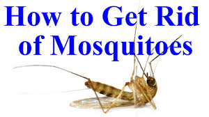 Exceptional How To Get Rid Of Mosquitoes In Yard/House