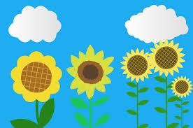 ひまわりイラスト フリーで使える可愛い向日葵のイラスト素材集
