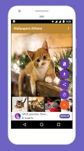 Cute Kitten Wallpapers HD 2018 🐈 🐱 for ...