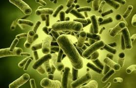Распространение бактерий в природе и их значение Увеличенные бактерии компьютерная модель