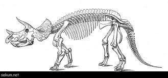 Enormous Dinosaur Skeleton Coloring Page Sunsun
