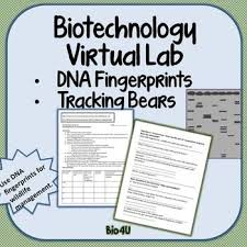 this virtual lab worksheet and answer key goes with tracking grizzlies with dna fingerprinting