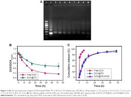 full text sl2b aptamer and folic acid dual targeting dna figure 2 a gel electrophoretic analysis of dox loaded dna td in mccoy s 5a medium plus 10% fbs 1 50 bp marker 2 td control 3 0 h 4 0 5 h 5 3 h