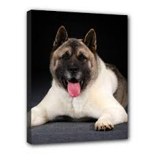 details about american akita inu canvas print dog puppy art portrait framed home decor gifts