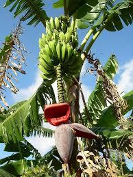 Fruits Tree PruningFruit Tree Shapes
