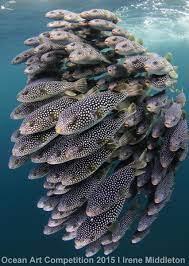 1st Place Novice DSLR Ocean Art 2015 Irene Middleton - Underwater  Photography Guide