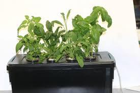 hydroponic herb garden. Plain Herb Hydroponic Herb Garden Throughout Hydroponic Herb Garden