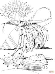 Small Picture Crabs Coloring S Free Coloring Pages House For Hermit Crab