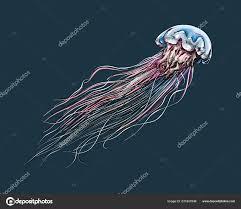 рука нарисованные эскиз медуз цвета на темном фоне подробные