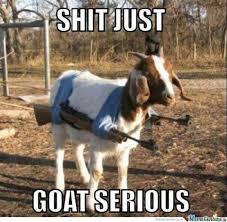 Funny-Goat-Memes-goat-serious-W630.jpg via Relatably.com