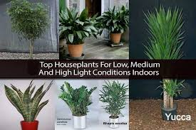 Indoor Plants Low Light Top Houseplants For Low Medium And High Light  Conditions Indoors