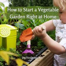 how to start a vegetable garden right