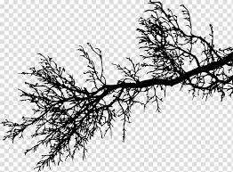 Branch Tree Silhouette Twig Branches Transparent Background Png