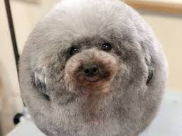 Cute Dog Quotes For Instagram Inspiration A Japanese Dog Salon Made A Dog Look Like A Fluffy Sheep INSIDER