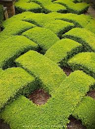 Small Picture 34 best box hedge designs images on Pinterest Landscaping